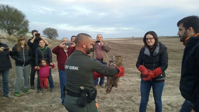Alliberat a la Sentiu de Sió un duc recuperat al Centre de Fauna de Vallcalent