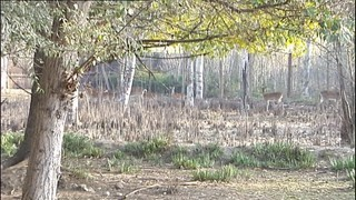 El centre de natura de Vimferri acull animals del centre de fauna salvatge de Vallcalent