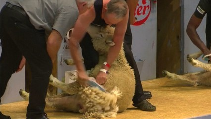 Campionat del Món d'esquilar ovelles