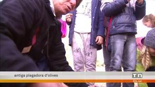 La gent gran de la Sénia explica el conreu tradicional d'oliveres als escolars del poble en unes jornades intergeneracionals