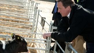 Vers pervers 73: David Cameron, torero i ballador de bolero