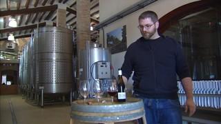Cellers catalans promocionen el vi novell, el primer vi, més que jove.