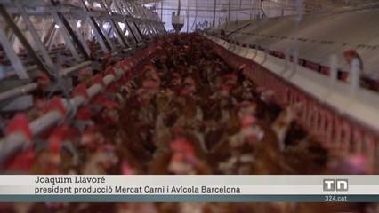 Puja un 70% el preu dels ous en origen mentre supermercats i botiguers intenten no traslladar-ho al preu final