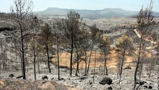 L'incendi ha cremat 1.200 hectàrees (ACN)