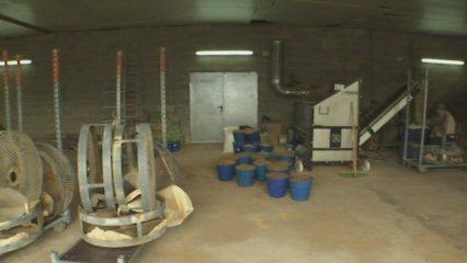 Bolets japonesos cultivats al Montseny