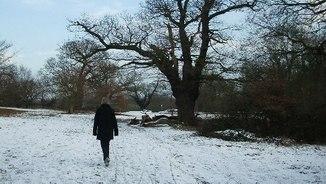 Ple hivern (IV)