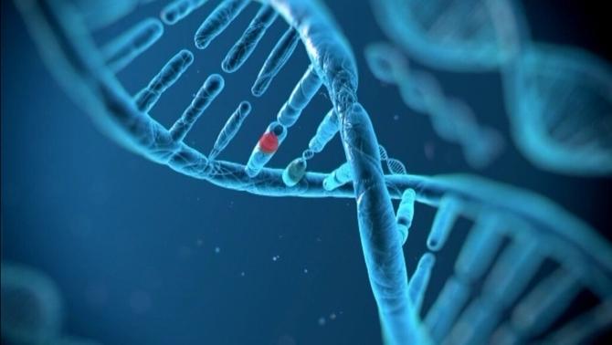 La manipulació genètica s'ha fetdurant la primera etapa del desenvolupament de l'embrió