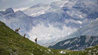 "Strauss: ""Simfonia alpina"" (Guia Plus)"