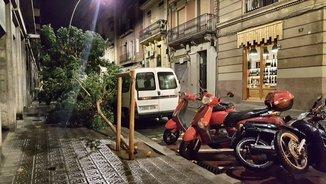 Un arbre caigut al carrer de l'Olivera amb carrer de Lleida, a Barcelona (Bea Rodríguez)