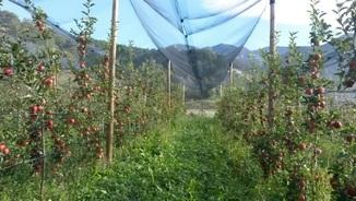 MeteoTerra 262 – Cooperativa de productors de poma de muntanya
