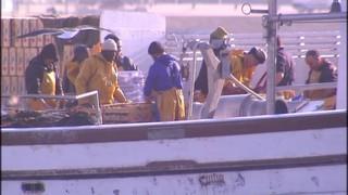 La pesca del peix blau a Tarragona, en crisi