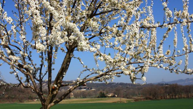 10 refranys del mes de març (1a part)