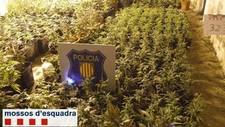 Marihuana confiscada