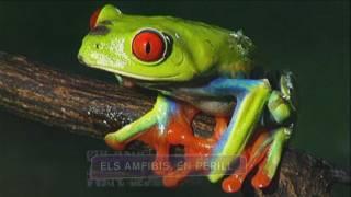 Amfibis en perill
