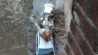 La ventada ha fet caure una gran branca sobre sobre dos cotxes al pont de Vallcarca, a Barcelona