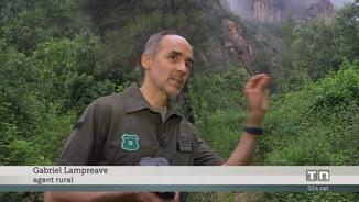 Diverses espècies d'aus protegides trien Montserrat per fer-hi el niu