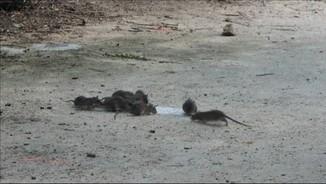 París: 2 rates per cada habitant
