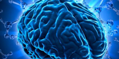 Científics catalans descobreixen que una irregularitat a determinades neurones provoca obesitat