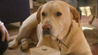 L'olfacte privilegiat dels gossos és capaç de detectar el càncer