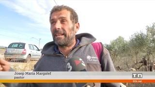 Moren 90 ovelles atropellades per l'Euromed a Mont-roig del Camp