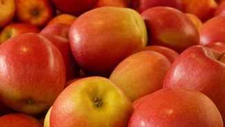 MeteoTerra 205 – Tardor, temps de pomes