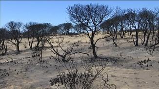 Les flames han cremat una part del Parc però no han entrat dins, que és la zona de més valor.