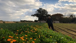 Reduir els herbicides per controlar les plagues