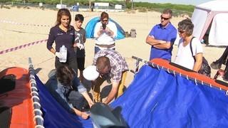 Cursos per saber gestionar la fauna marina que arriba a les nostres costes