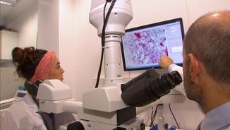 Dos investigadors observen cèl·lules amb el microscopi electrònic