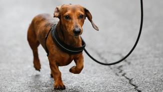 Tens una mascota? La llei reconeixerà l'estatus dels animals com a éssers sensibles