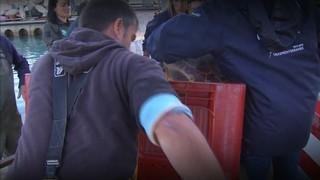 Rescaten una tortuga Babaua