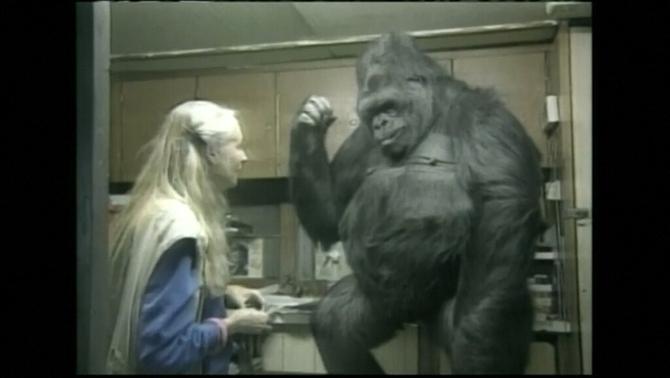 Mor la Koko, la goril·la que parlava a través del llenguatge de signes