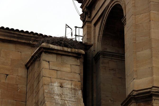 La Generalitat autoritza al Capítol retirar l'últim niu de cigonya que queda a la Catedral Nova de Lleida