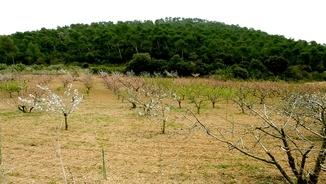 MeteoTerra 274 – El parc de Collserola, una aposta per la producció agrària agroecològica