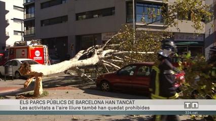 El fort vent fa caure arbres