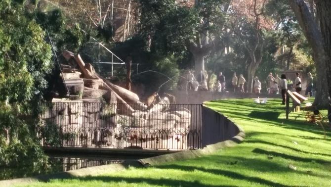 L'home que ha saltat a l'espai dels lleons del Zoo de Barcelona, en estat crític