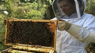 L'apicultor contractat per l'Ajuntament de Barcelona