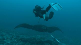 Un submarinista amb una manta gegant