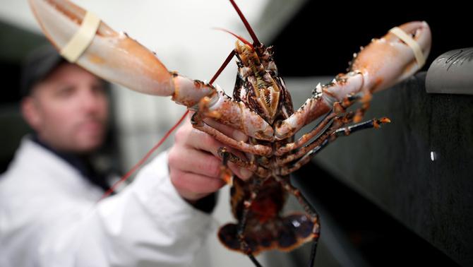 Suïssa prohibeix tirar les llagostes vives a l'olla d'aigua bullent per cuinar-les