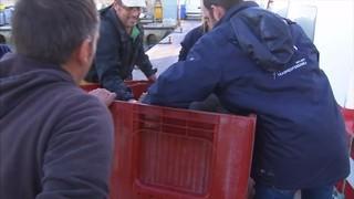 Rescaten una tortuga marina al port de les Cases d'Alcanar