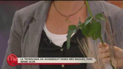 """El món de la rosa a """"Divendres"""""""