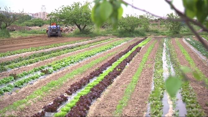 L'agricultura ecològica, una assignatura pendent a la universitat