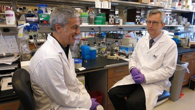 Albert Om i Joan Massagué, al laboratori.