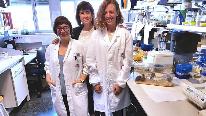 Investigadores catalanes curen la diabetis 2 i l'obesitat en ratolins amb teràpia gènica