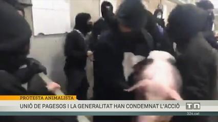 150 activistes animalistes irrompen en un escorxador de Riudellots de la Selva