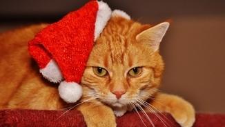 "Juanjo Sáez: ""Fem que el Nadal sigui 'random' i celebrem-lo cada 4 anys"""