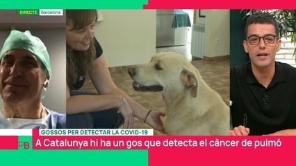 Gossos per detectar la Covid-19
