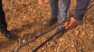 Com optimitzen l'aigua els pagesos?