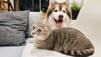 Consultori veterinari: la nostra mascota ens pot contagiar el coronavirus?