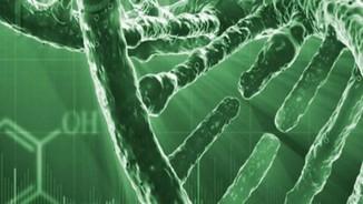 Mutacions que han permès la nostra evolució
